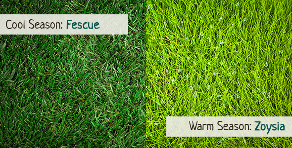 Warm Season Grass