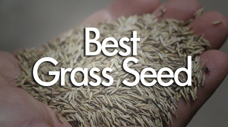 Best Grass Seed Reviews and Buying Guide
