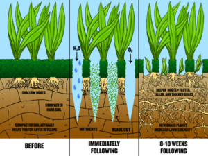 Aerate Lawn guide