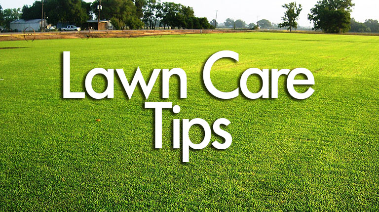 Lawn Care Tips: 7 simple ways to keep your lawn looking fresh