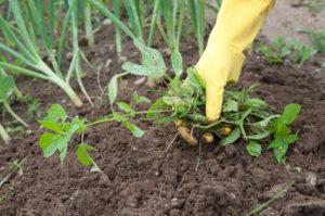 Get rid of weed